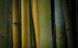 Bamboo combines with Sida Rhombifolia for hygiene