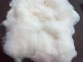 Greige, 29 mm, 2.8 Denier, For making yarn