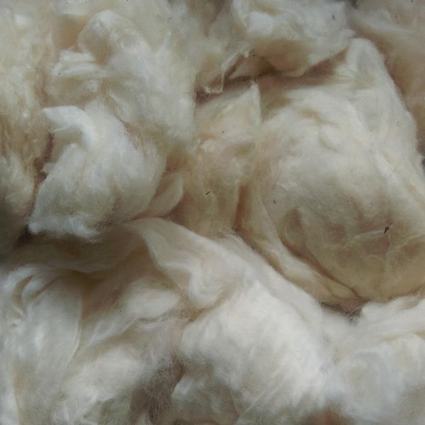 100% Cotton Fibre