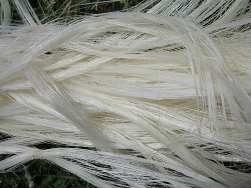 Sisal Fibre-Natural