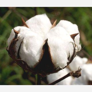 Cotton Fibre-Natural
