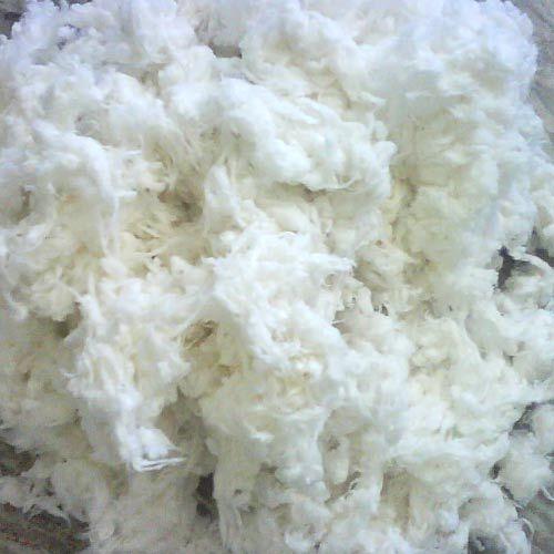 Raw Organic Cotton Fibre