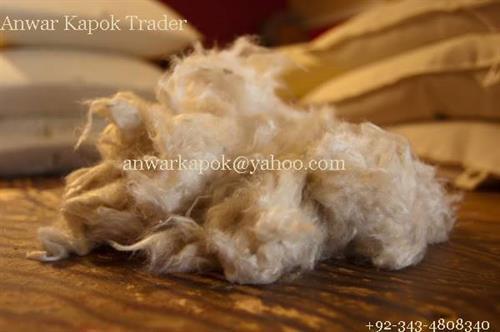 Kapok Fibre-Natural