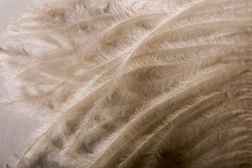 Feather Fibre