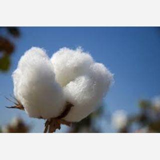 Raw Cotton Fibre