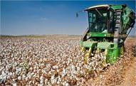 India backs C4 demand for eliminating cotton subsidies