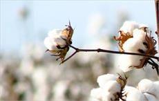 Australian fashion, textile bigwigs learn about cotton