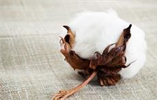 Shankar-6 cotton's value rises in international market