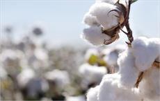 EU joins International Cotton Advisory Committee