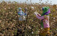 Primark makes sustainable cotton permanent fixture