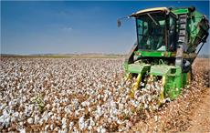C&A commits to source more sustainable cotton by 2020