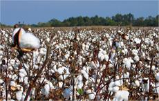 Low supply pushes up price in Brazilian cotton market