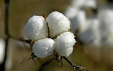 US bans import of cotton goods from Turkmenistan