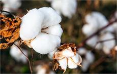 Global cotton trade strong in late-season 2017-18: USDA