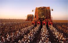 Cotton cultivated over 2.69 mn hectares in Pakistan