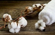 Cotton 2040 working to increase sustainable cotton