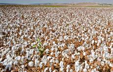 Bangladesh imported 46% of cotton requirement from India
