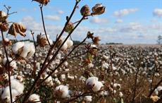 India's 2018-19 forward cotton export contract up by 100%