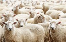 AWI applying artificial intelligence in wool industry