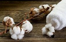 Nigeria introduces transgenic cotton varieties