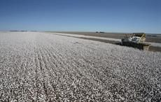 Prices drop in Brazilian cotton market this month