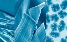 Markische Faser & Kelheim Fibres to develop new products