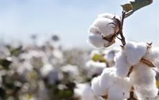 US approves transgenic cotton variety as human food source