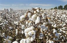Global Cotton Sustainability conference moves to March '21
