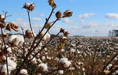 World cotton production projected 2.5% up in 2019-20