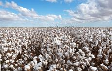 Brazilian cotton prices firm despite low global prices