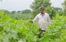 Area of kharif cotton 17.28% more compared to last year