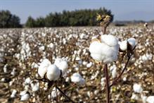 Australian Cotton report uncovers stories of giving