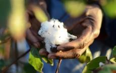 BCI working with fellow sustainable cotton standards