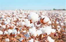 Pak trade bodies demand duty-free cotton yarn export