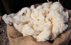 PRC increases Australian wool import quota