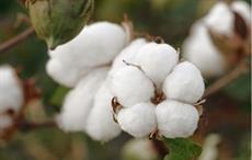 U.S. Cotton Trust Protocol gets Latin-American members