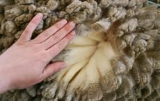 Australian wool EMI drops 0.8% this week
