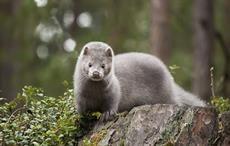 Pic: Fur Free Retailer