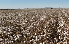 CAI increases 2020-21 cotton crop estimate to 360 lakh bales