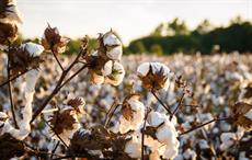 Bangladesh can save $500 mn annually by recycling cotton waste: CFP