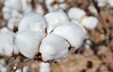 SIMA concerned over skyrocketing cotton prices in India