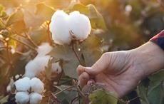 Ralph Lauren & Soil Health Institute unveil new US cotton programme