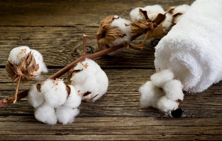 Oeko-Tex unveils GMO test for organic cotton