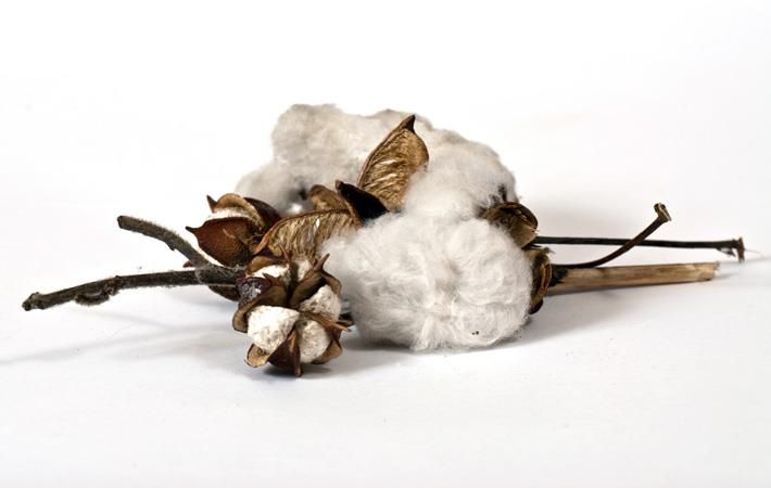 India likely to approve phase II of Tech Mission on Cotton