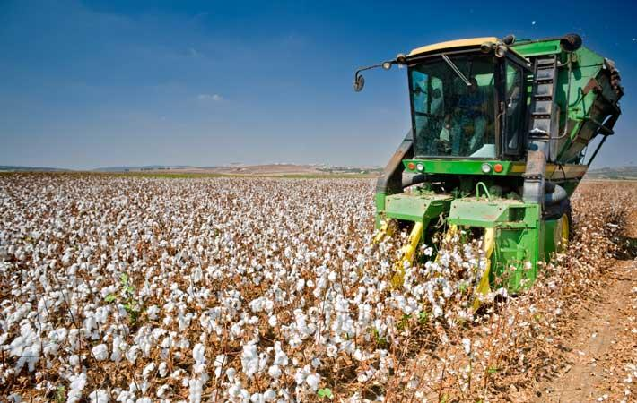 Pak allows cotton imports from Central Asia via land