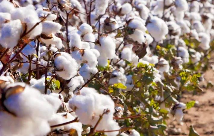 Pakistani cabinet committee allows duty-free cotton import