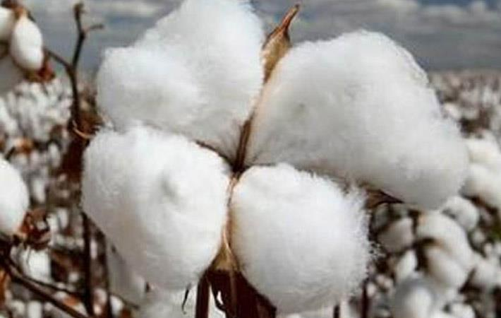 Nigeria starts distributing cotton seeds to farmers