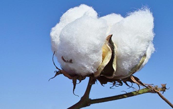 Pic: Better Cotton