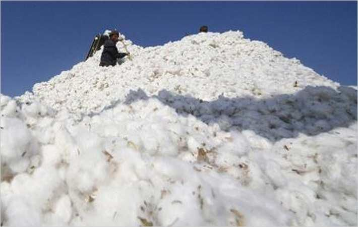 Gap to source 100% sustainable cotton by 2025