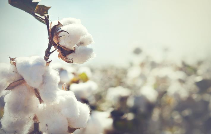 Cotton arrival at Pak ginneries down 6.94% as on May 1